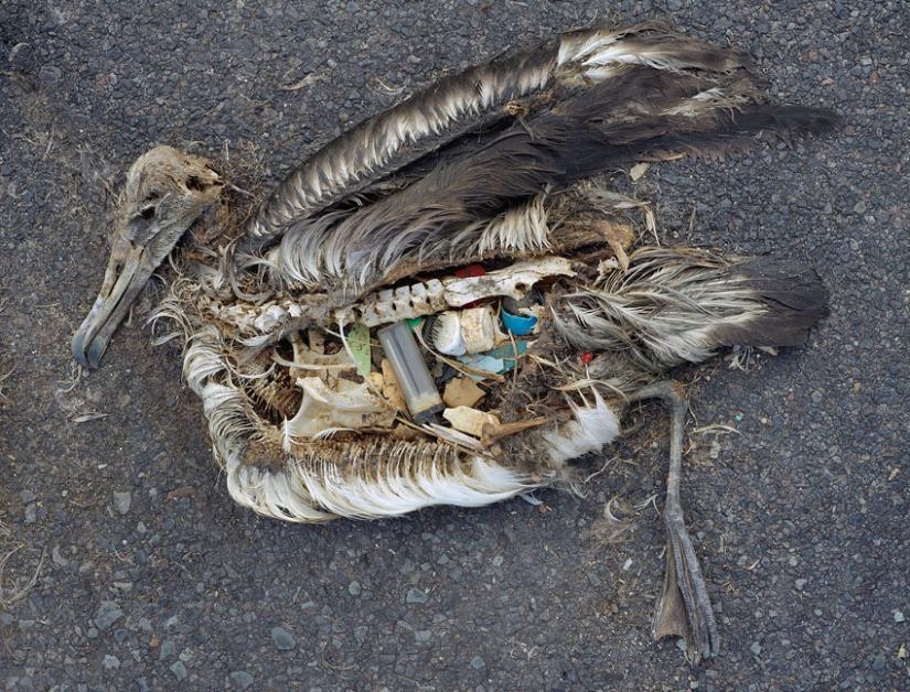 Extinction Studies – Consider This, KZYXRadio