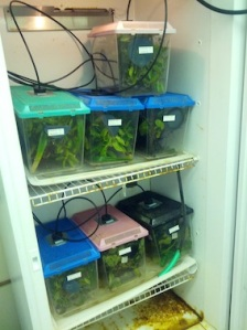 One of the environmental chambers in the 'snail ark' at the University of Hawai'i