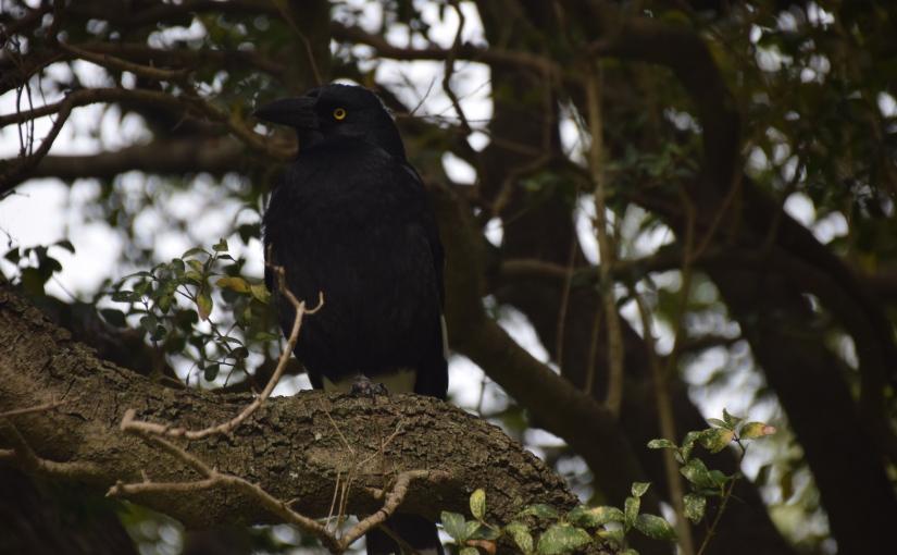 Some bird photos