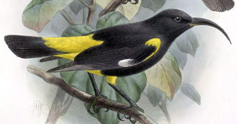"""Die Welt interview: """"Humanity is poorer for the death ofbirds"""""""